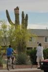 Neighborhood Saguaro