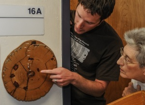 Tree ring dating oldest