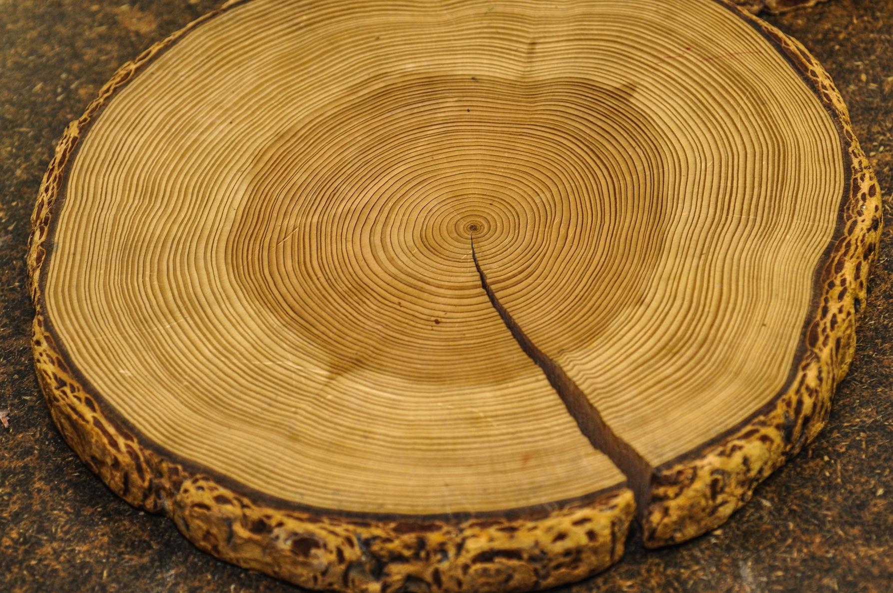 Tree Ring 3674