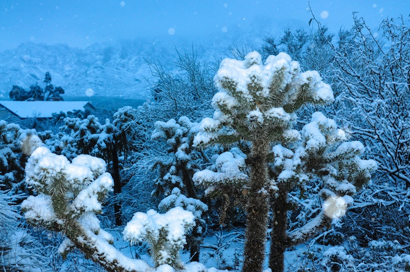 U.S. BRACES FOR WORST BLIZZARD IN RECENT HISTORY, TUCSON ...
