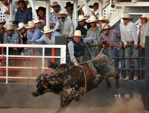 ALL-INDIAN BULL RIDERS