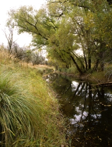 Cienega Creek riparian district is a protected area for birding without hunting.