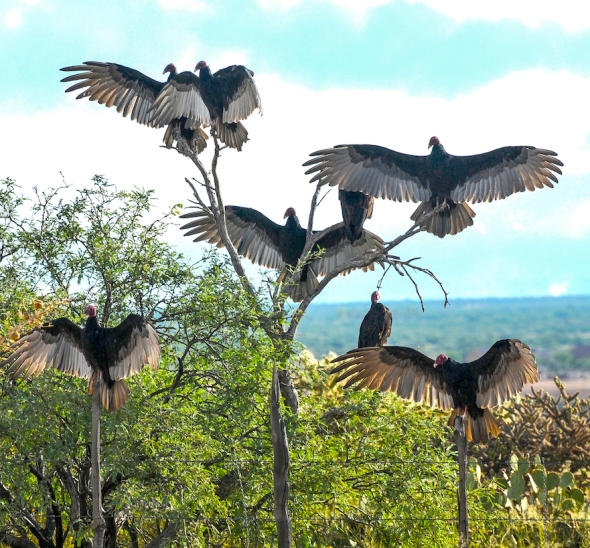 SOUTHERN ARIZONA is home to more than 500 species of bird which bring $1.4 billion of Tourism dollars to the Tucson area.