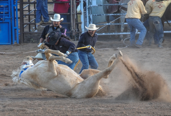 76th SELLS RODEO and FAIR ….Wild Horse Race-4274