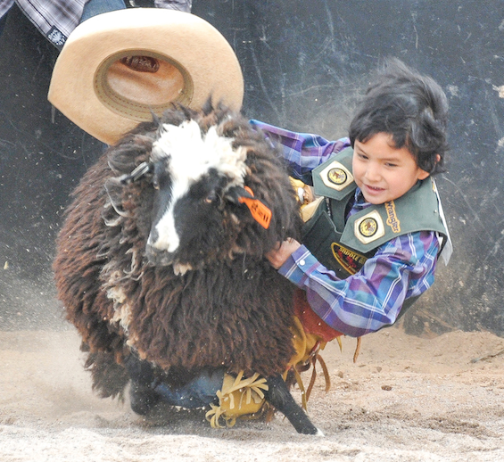 SACATON JR RODEO 5225