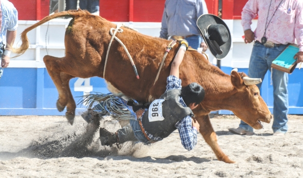 SACATON JR RODEO 5496