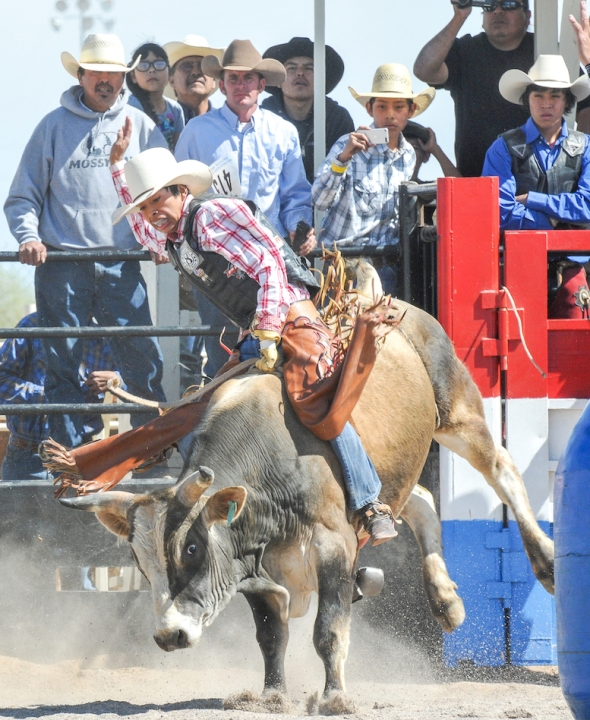 SACATON JR RODEO 5557