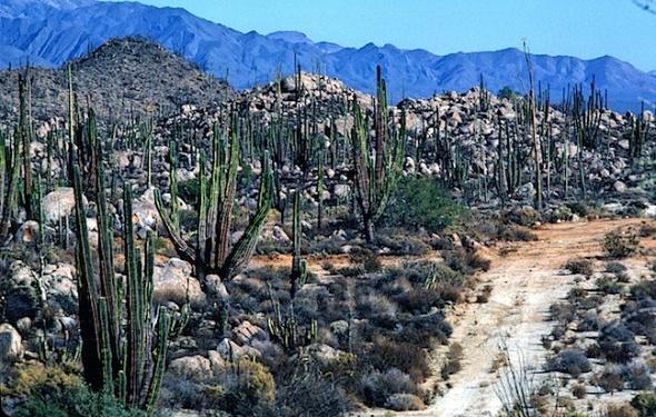 Road to San Borja