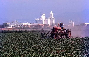SAN XAVIER FARMS-