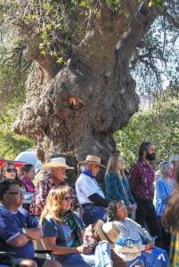Emory Oaks, native to Arizona, New Mexico, Texas and Mexico can grow up to 80 feet tall.