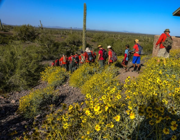 BOY SCOUTS TACKLING THE TALL PEAK ENJOYING THE BRITTLE BUSH