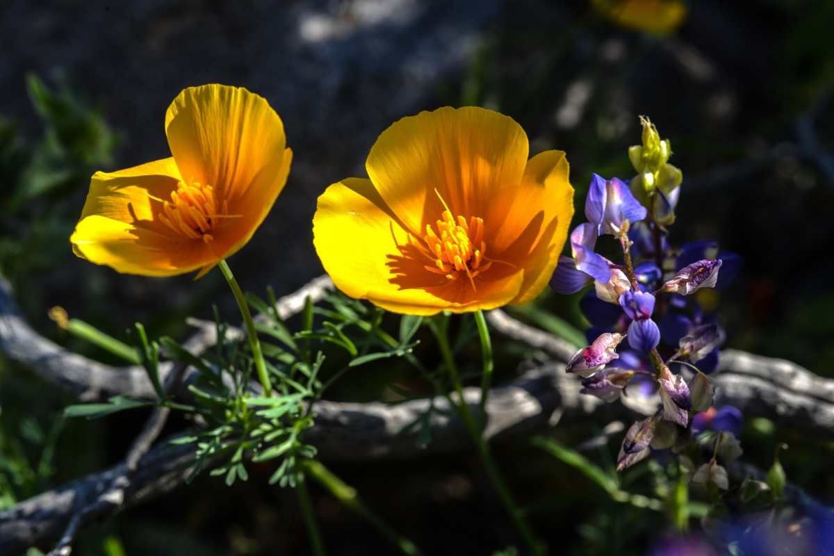 Desert Wildflowers Just The Icing On The Cake For Hikers