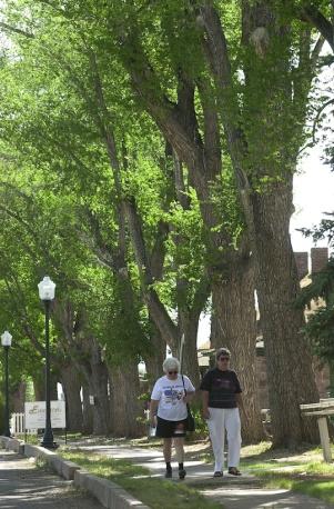 OFFICER TREE ROWlr