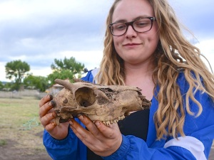 Archaeozoology - The study of animal remains, usually bones, from the past. Alexandra Norwood (Pasadena, CA) enjoys the final product.