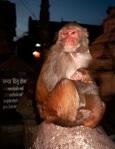 pks monkey photo