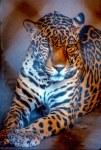 Jaguar-ARIZONA-SONORA DESERT MUSEUM-
