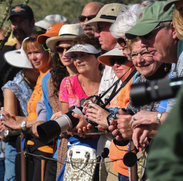 OWL TUCSON AZ-SON DESERTMUSUM-8480