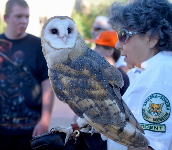 owl4540