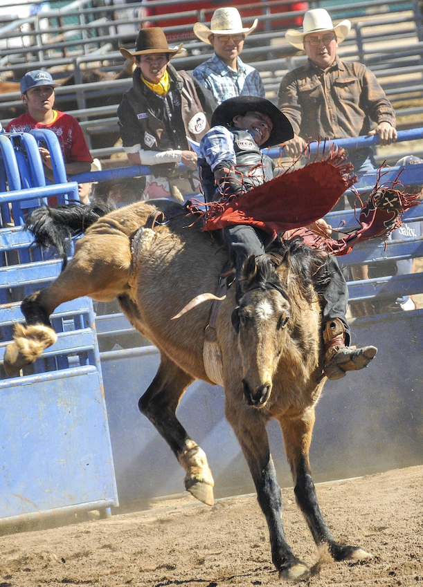 sells-rodeo-2017-4183-1