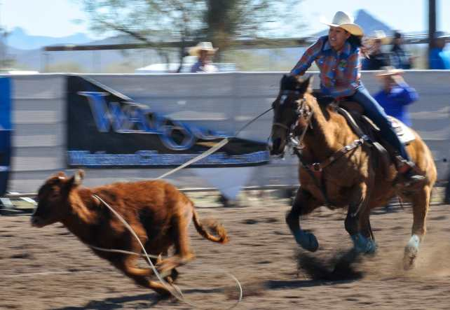 sells-rodeo-2017-4241