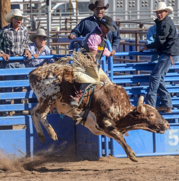 sells-rodeo-2017-9043